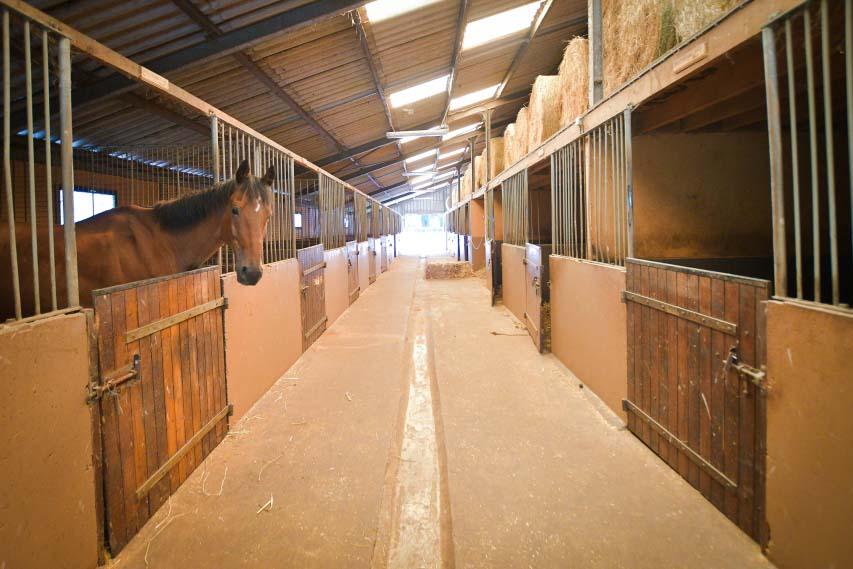 boxes chevaux retraités