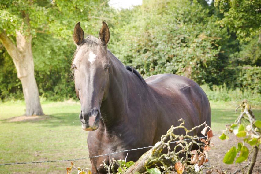 cheval réformé