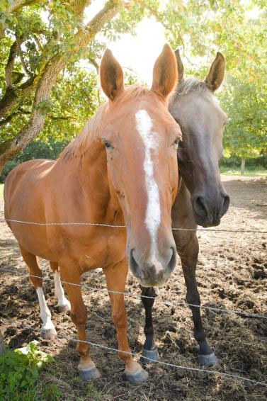 parrainez un cheval