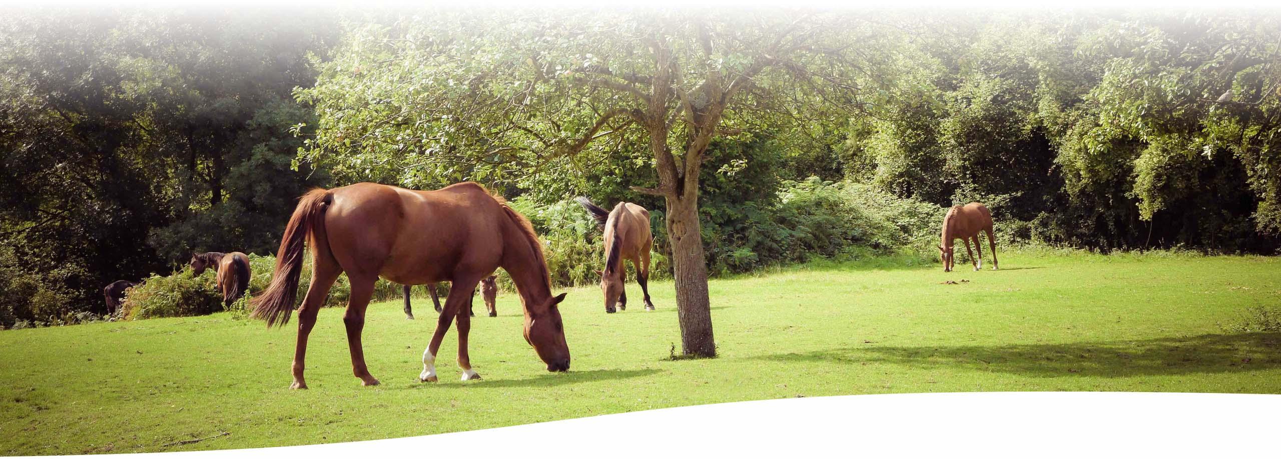 Retraite des chevaux de la garde Républicaine en Normandie