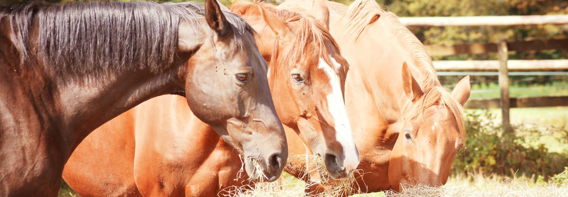 revue de presse association sauvegarde animaux