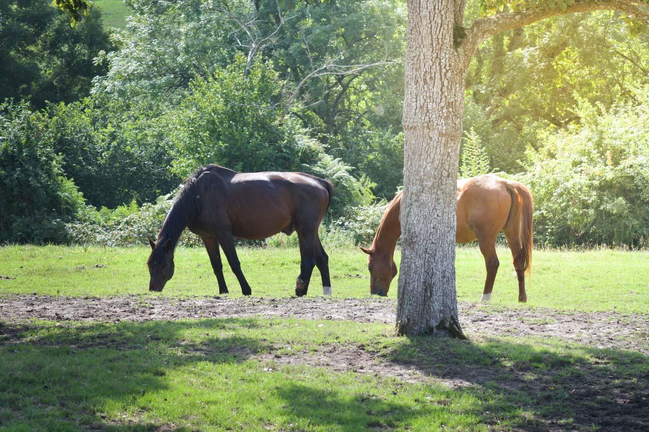 contactez association aide aux chevaux