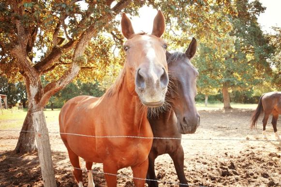 partenariat soutien association animalière